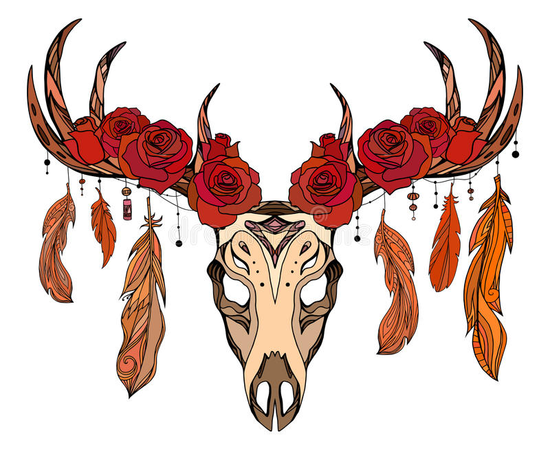 Illustration d'un crâne de cerfs communs avec des roses, plumes illustration de vecteur