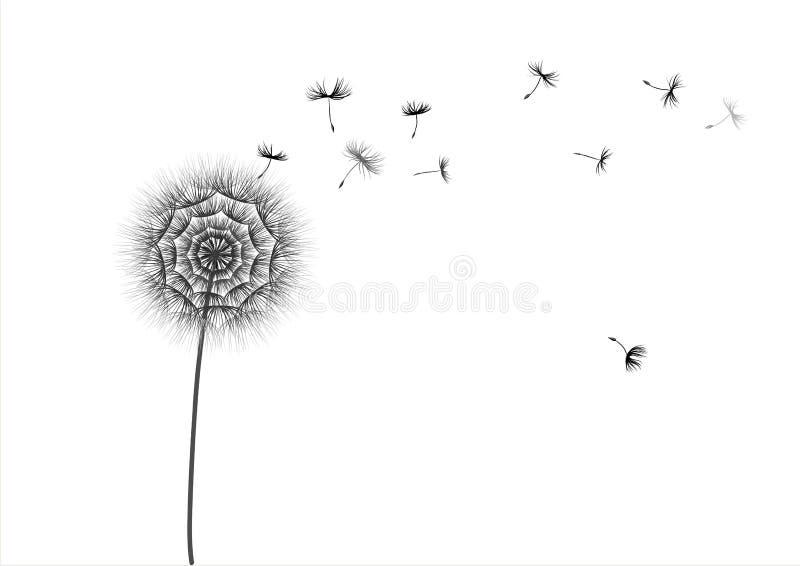Illustration d'un pissenlit de fleur et des graines volantes sur un fond blanc illustration libre de droits