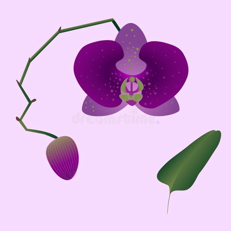 Illustration d'une orchidée rose avec un bourgeon, une feuille et une tige sur le fond rose-clair illustration libre de droits