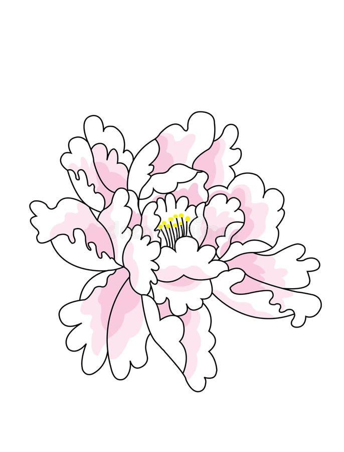 Illustration d'une pivoine illustration de vecteur