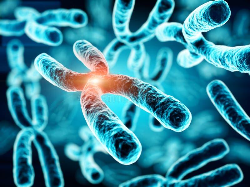 Illustration 3d von Chromosomen vektor abbildung