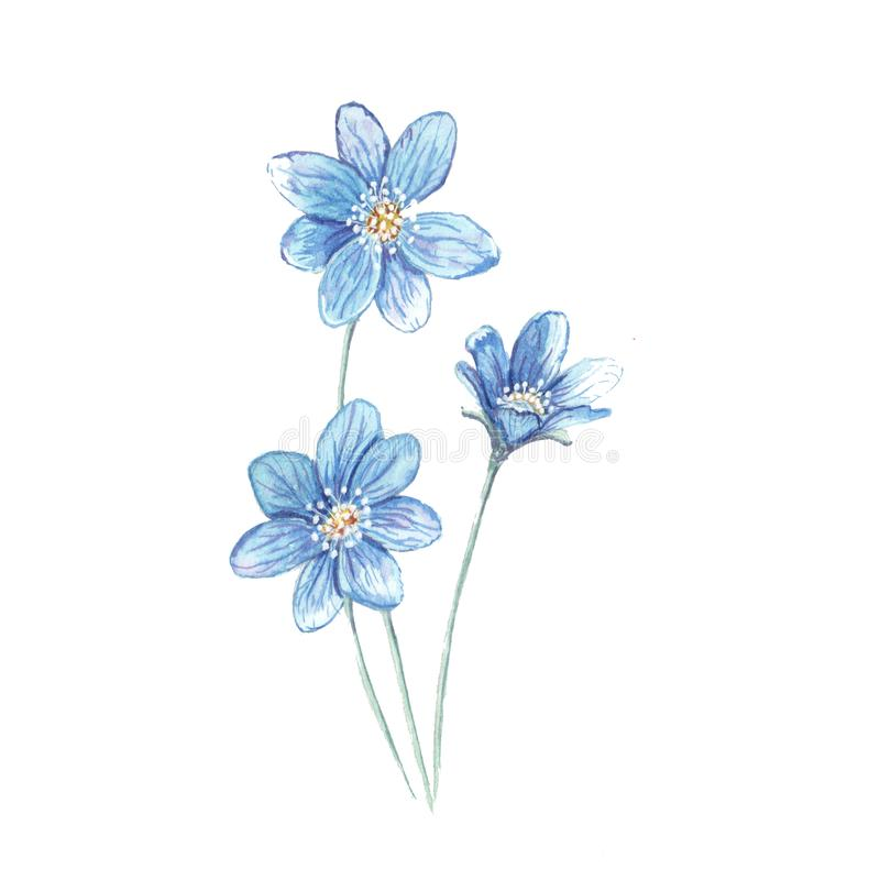 Illustration de bleu de fleur photographie stock