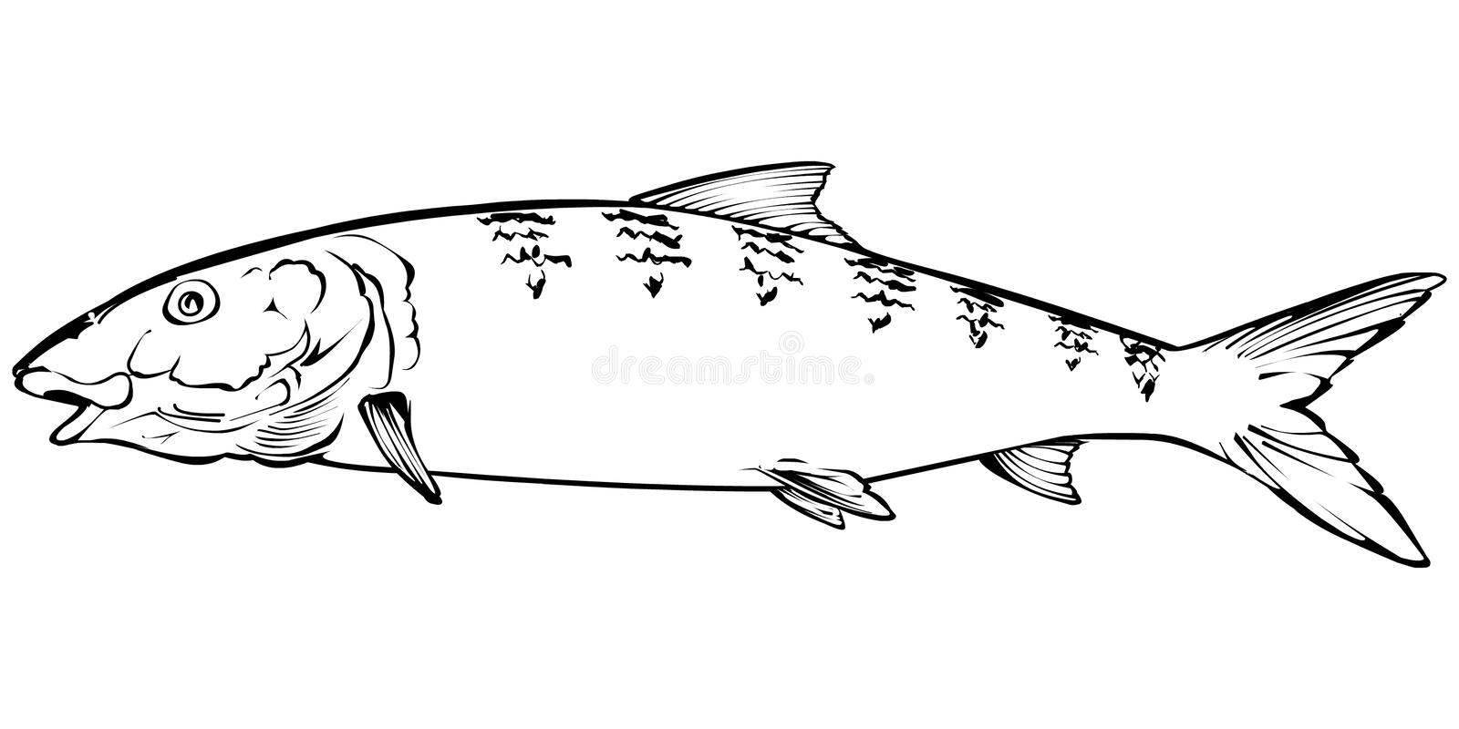 Illustration de Bonefish illustration libre de droits