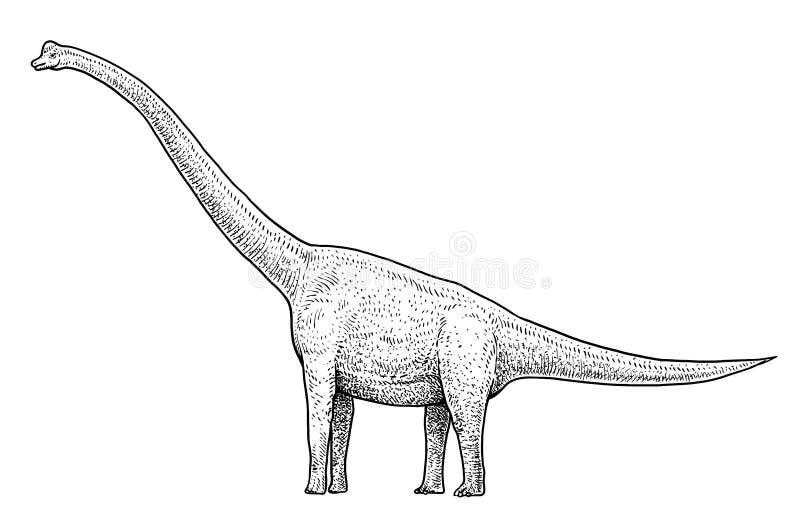 Illustration de Brachiosaurus, dessin, gravure, encre, schéma, vecteur illustration de vecteur