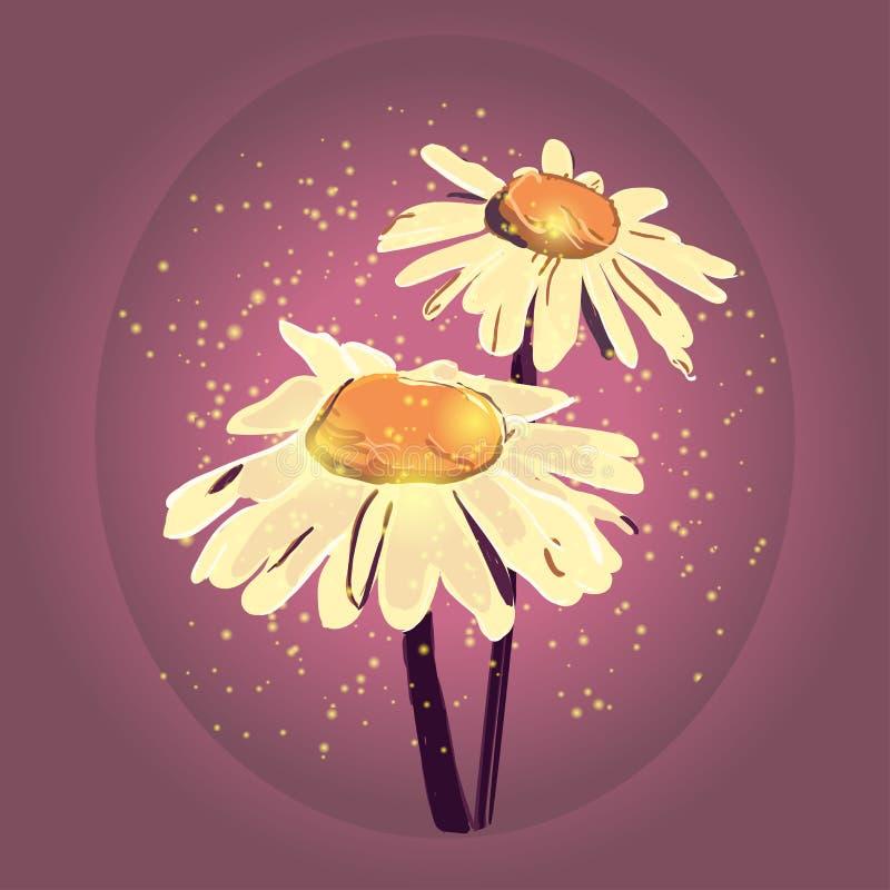 Illustration de camomille de vecteur Camomille tirée par la main images stock