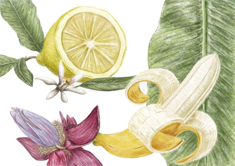 Illustration de citron image stock
