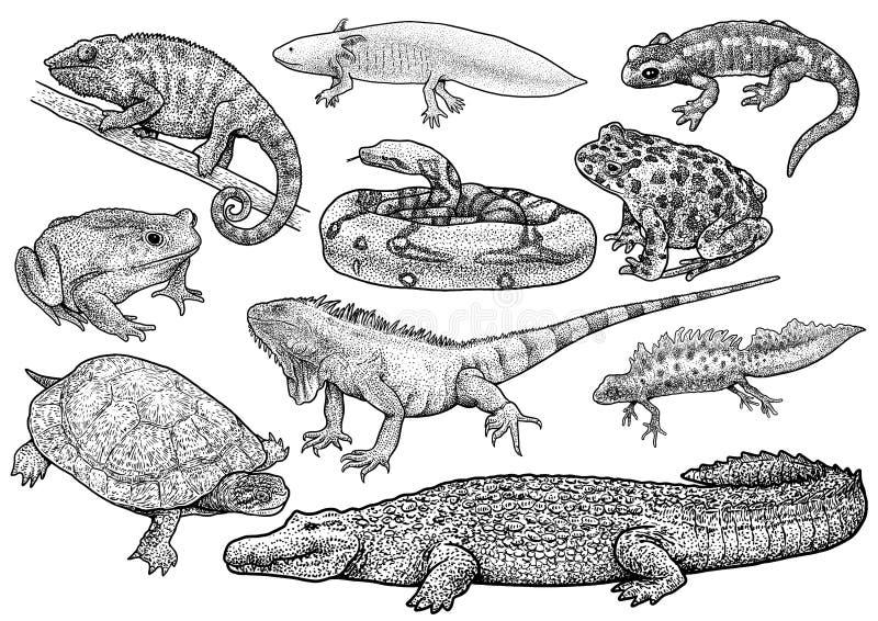 Illustration de collection d'animaux marins, dessin, gravure, encre, schéma, illustration de coquille de vectorNautilus, dessin,  illustration libre de droits