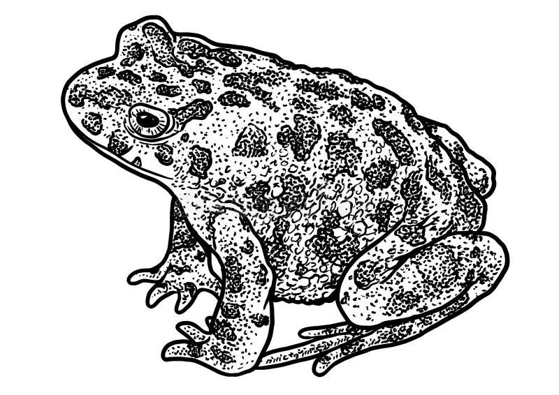 Illustration de collection d 39 animaux marins dessin gravure encre sch ma illustration de - Dessin d animaux marins ...