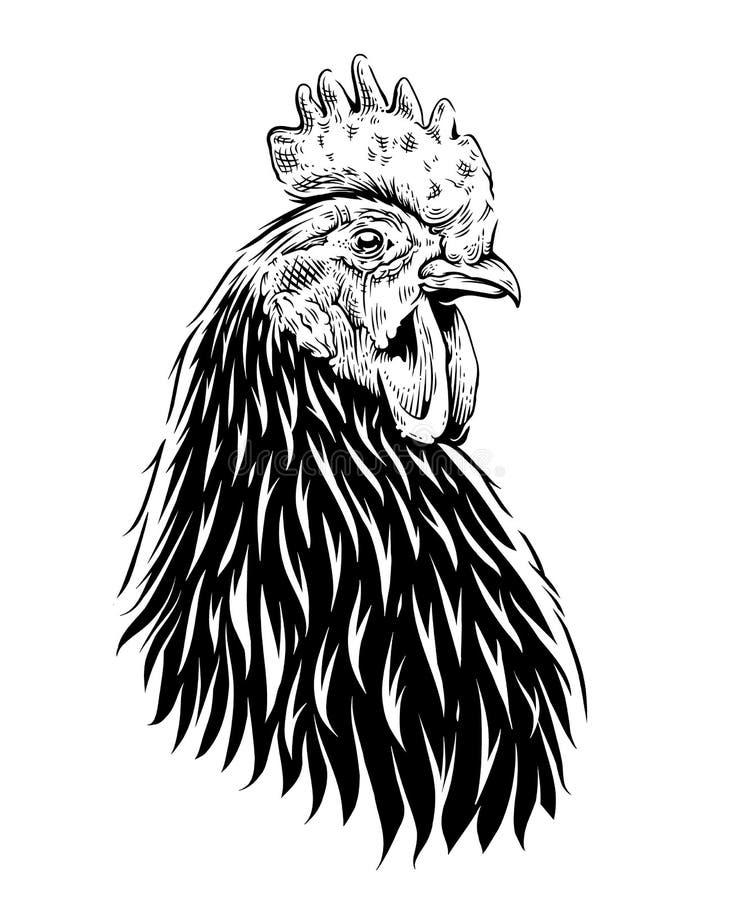 Illustration de coq de vecteur illustration de vecteur
