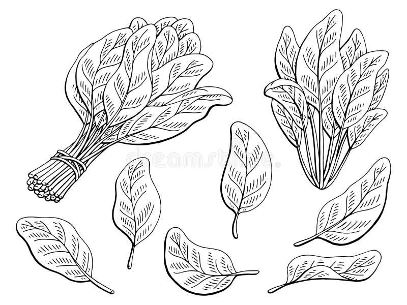 Illustration de croquis d'isolement par blanc noir graphique d'épinards illustration de vecteur
