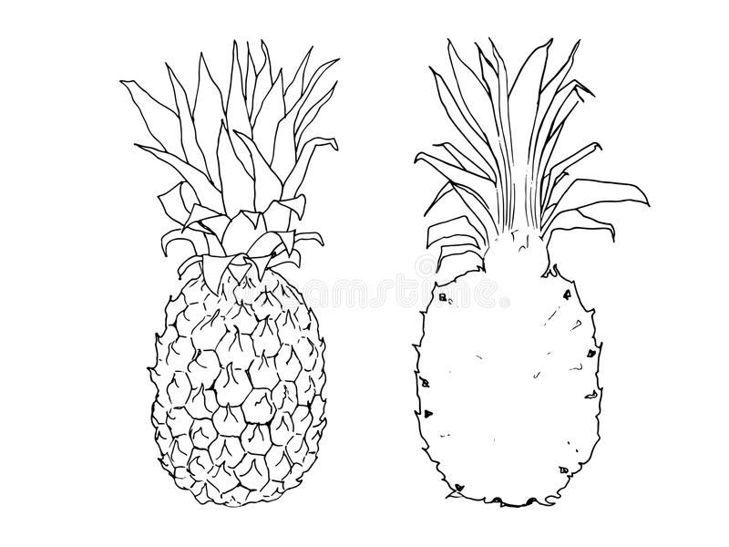 Illustration de croquis de vecteur d'ananas photo stock