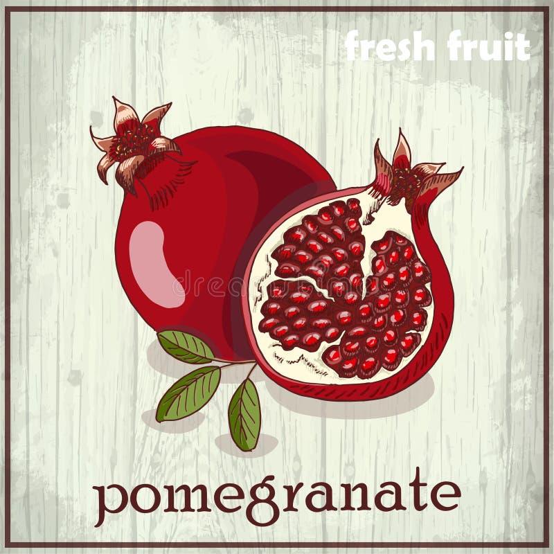 Illustration de dessin de main de grenade fond de croquis de fruit frais illustration stock - Grenade fruit dessin ...