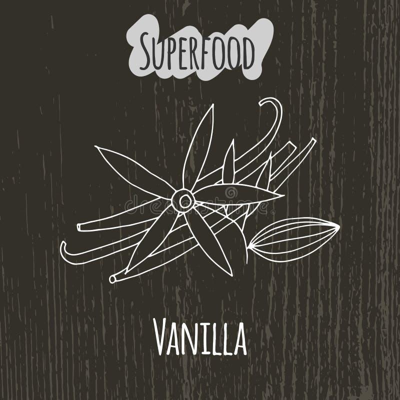 Illustration de dessin de main de la vanille illustration de vecteur illustration du condiment - Vanille dessin ...