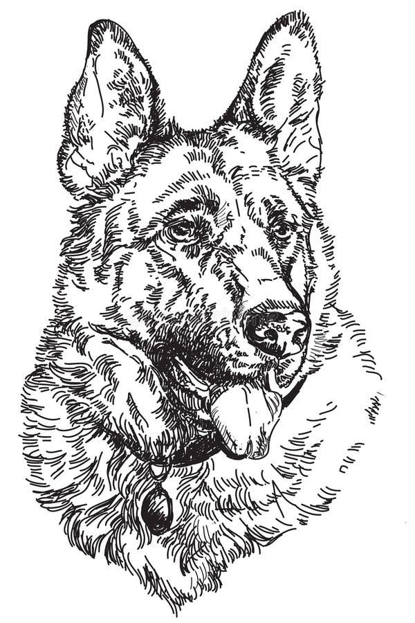 Illustration de dessin de main de vecteur de berger allemand illustration de vecteur