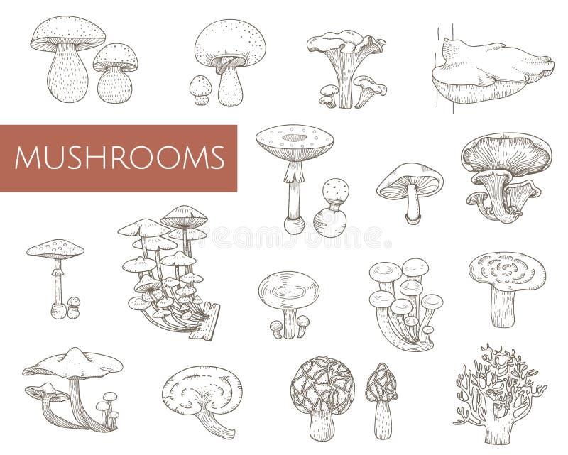 Illustration de divers champignons d'isolement illustration libre de droits