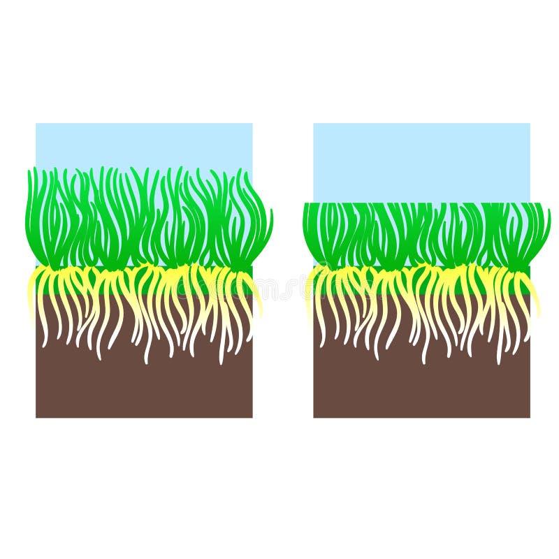 Illustration de fauchage d'étape de pelouse Lawncare de cisaillement de jardinage d'herbe, aménageant le service en parc Vecteur  illustration libre de droits