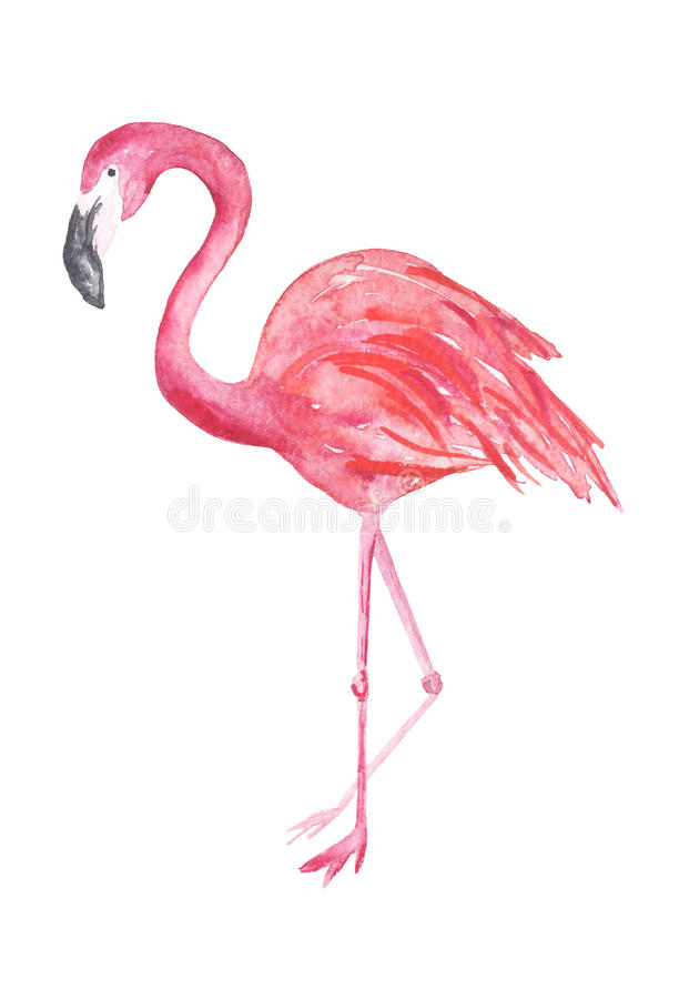 Illustration de flamant d'aquarelle illustration stock