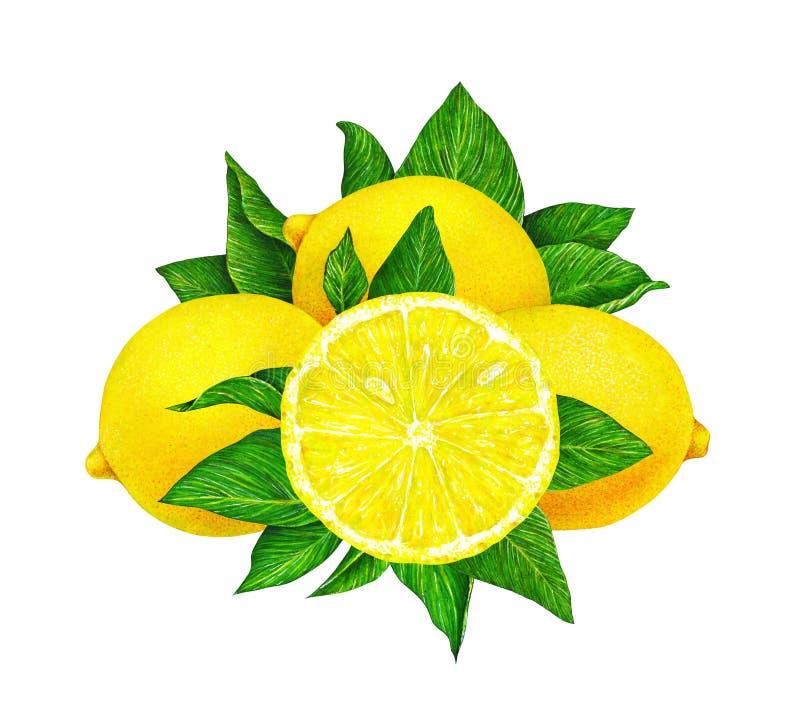Illustration de fruit jaune de citron avec des feuilles de vert d'isolement sur le fond blanc Retrait d'aquarelle à la main illustration libre de droits
