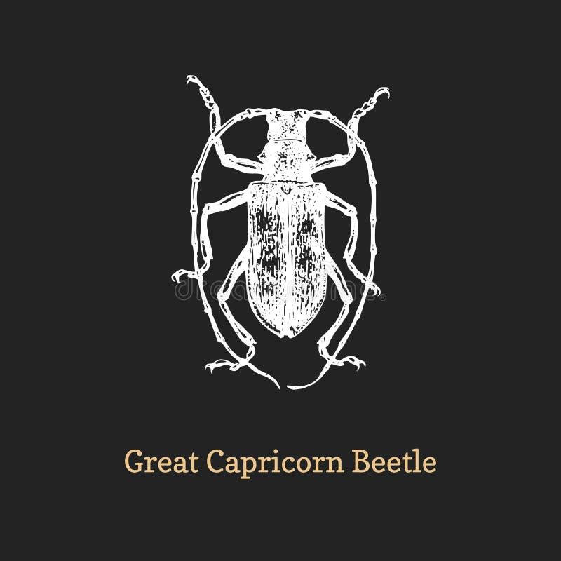 Illustration de grand scarabée de Capricorne Insecte tiré en gravant le style Croquis dans le vecteur images stock