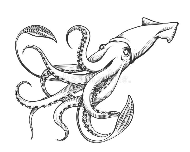Illustration de gravure de calmar géant illustration de vecteur