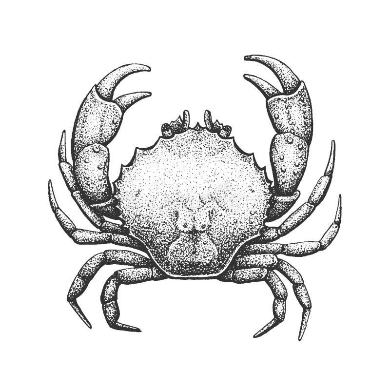 Illustration de gravure de crabe illustration libre de droits