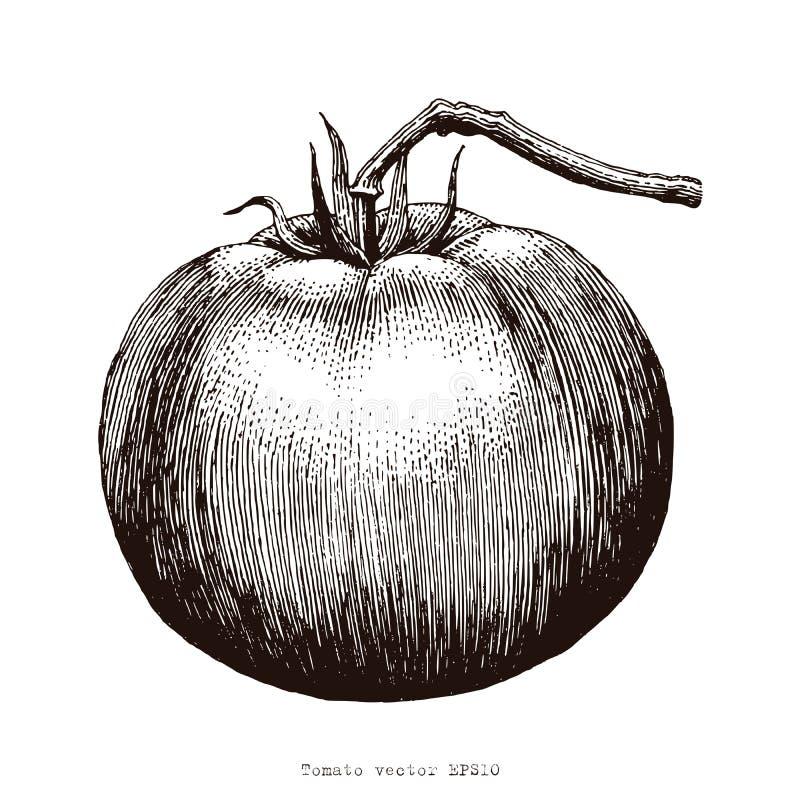 Illustration de gravure de dessin de main de tomates illustration libre de droits