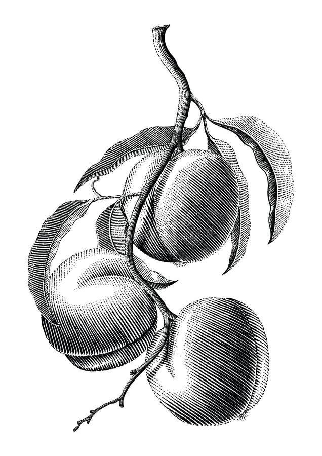 Illustration de gravure de vintage de dessin de main de branche de pêche sur le petit morceau illustration de vecteur