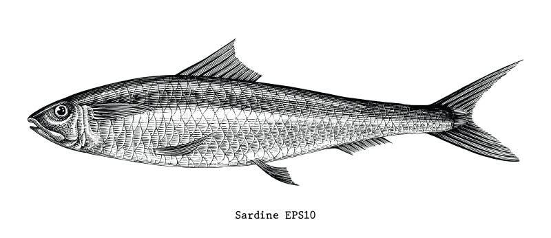 Illustration de gravure de vintage de dessin de main de poissons de sardine illustration libre de droits