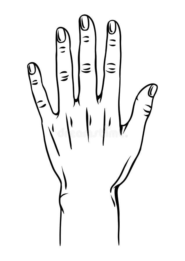 Illustration de main humaine illustration libre de droits