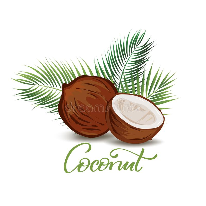 Illustration de noix de coco et de palmettes illustration libre de droits