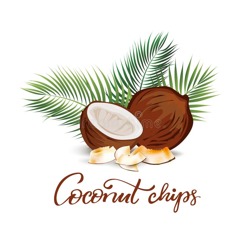 Illustration de noix de coco et de palmettes illustration stock