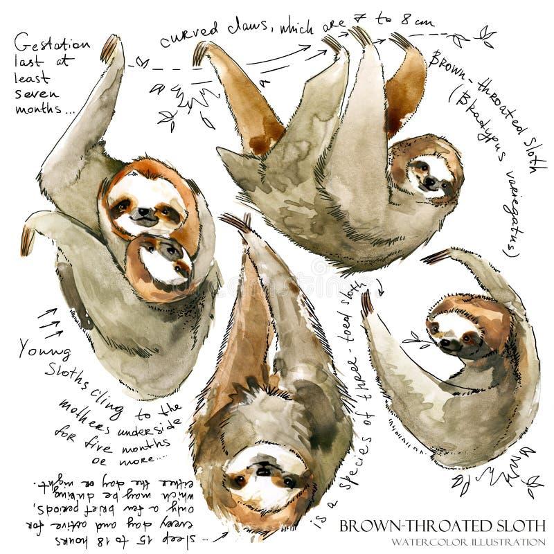 Illustration de paresse d'aquarelle animal tropical illustration de vecteur