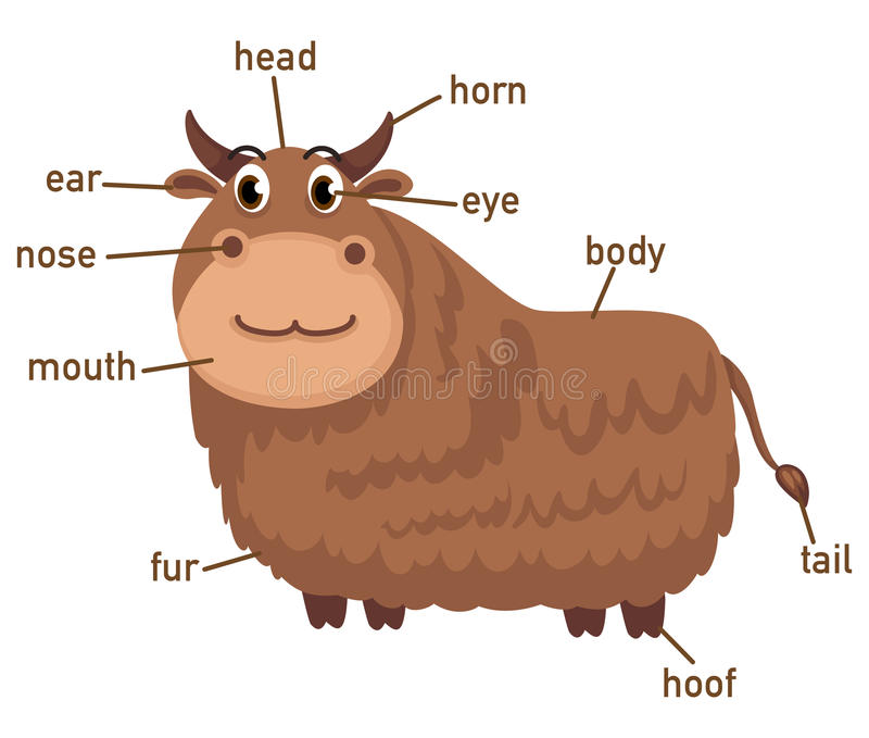Illustration de pièce de vocabulaire de yaks de corps illustration de vecteur