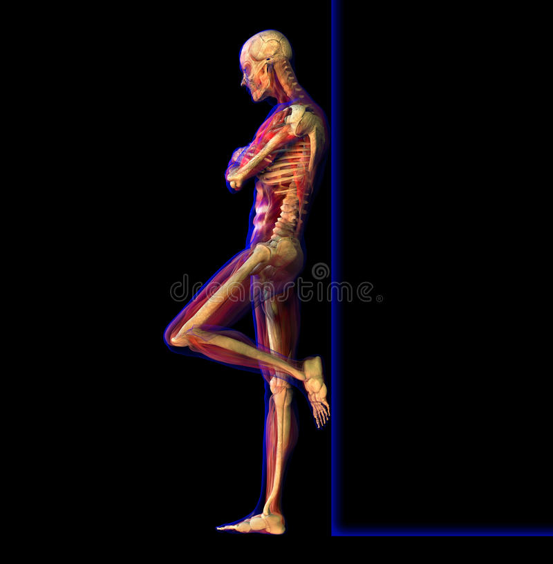 Illustration de rayon X de l'anatomie, squelette illustration libre de droits
