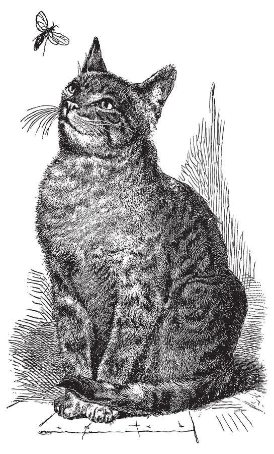 Illustration de retrait de chat de vecteur illustration libre de droits