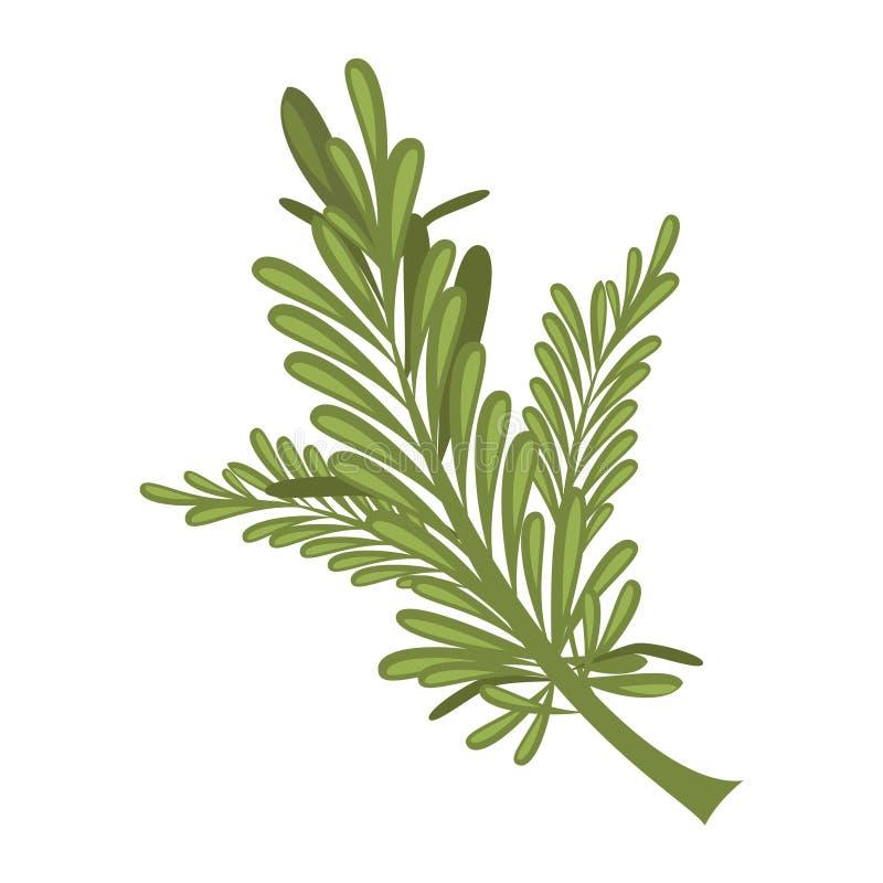 Illustration de romarin de vecteur d'isolement dans le style de bande dessinée Herbes et séries d'espèces illustration de vecteur