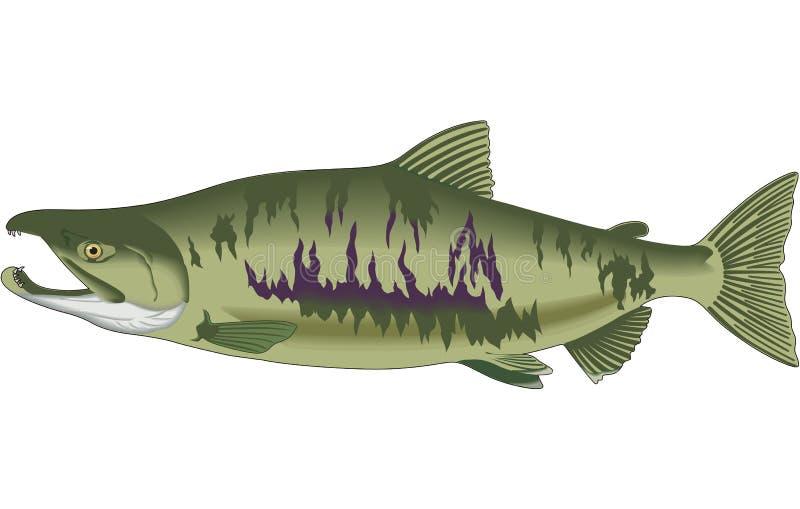 Illustration de saumons de copain illustration libre de droits