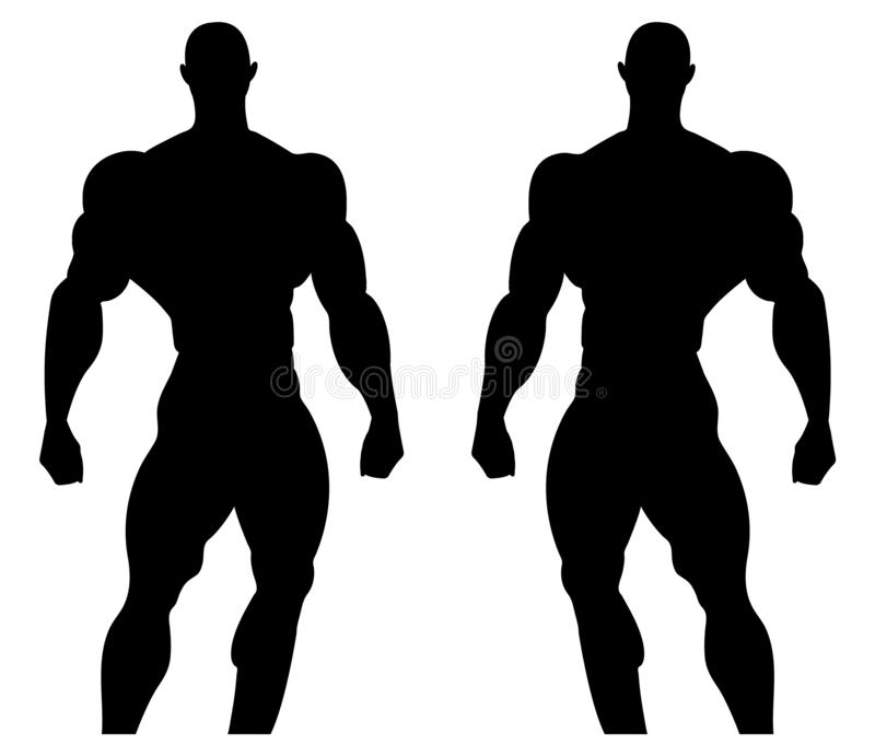 Illustration de silhouette d'un bodybuilder Anatomie musculaire masculine Illustration de vecteur illustration libre de droits