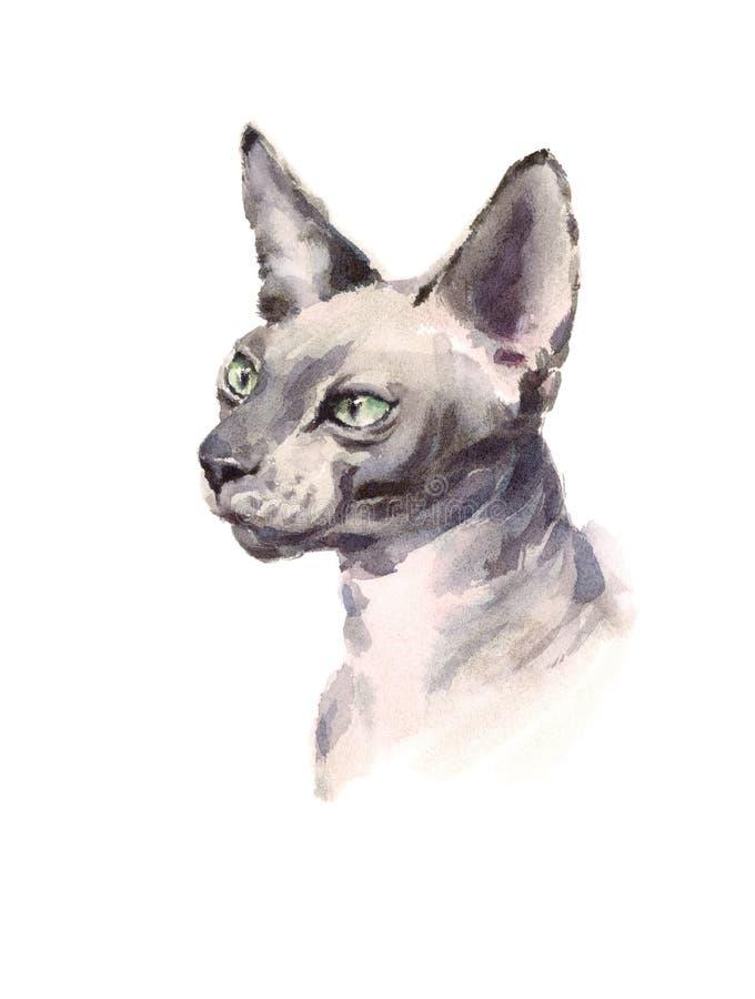 Illustration de Sphynx Cat Hand Drawn Pet Portrait d'aquarelle d'isolement sur le fond blanc illustration de vecteur