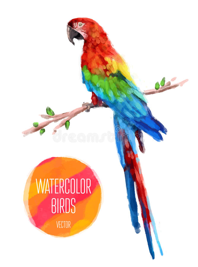 Illustration de style d'aquarelle de vecteur d'oiseau illustration stock