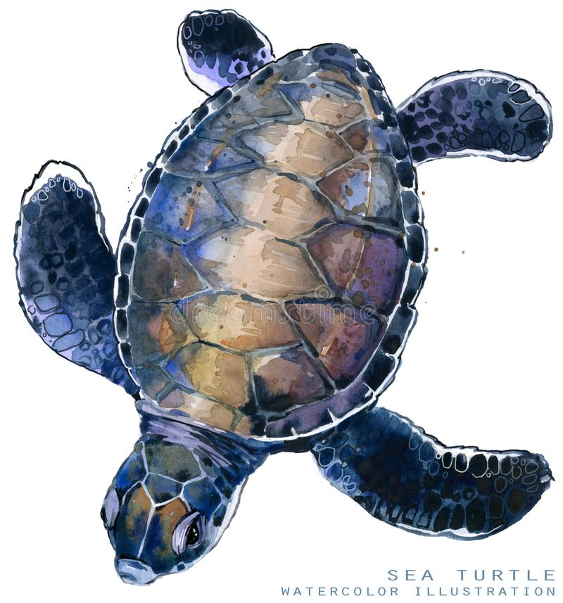Illustration de tortue de mer d'aquarelle illustration stock