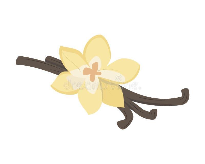 Illustration de vanille de vecteur d'isolement dans le style de bande dessinée Herbes et séries d'espèces illustration stock