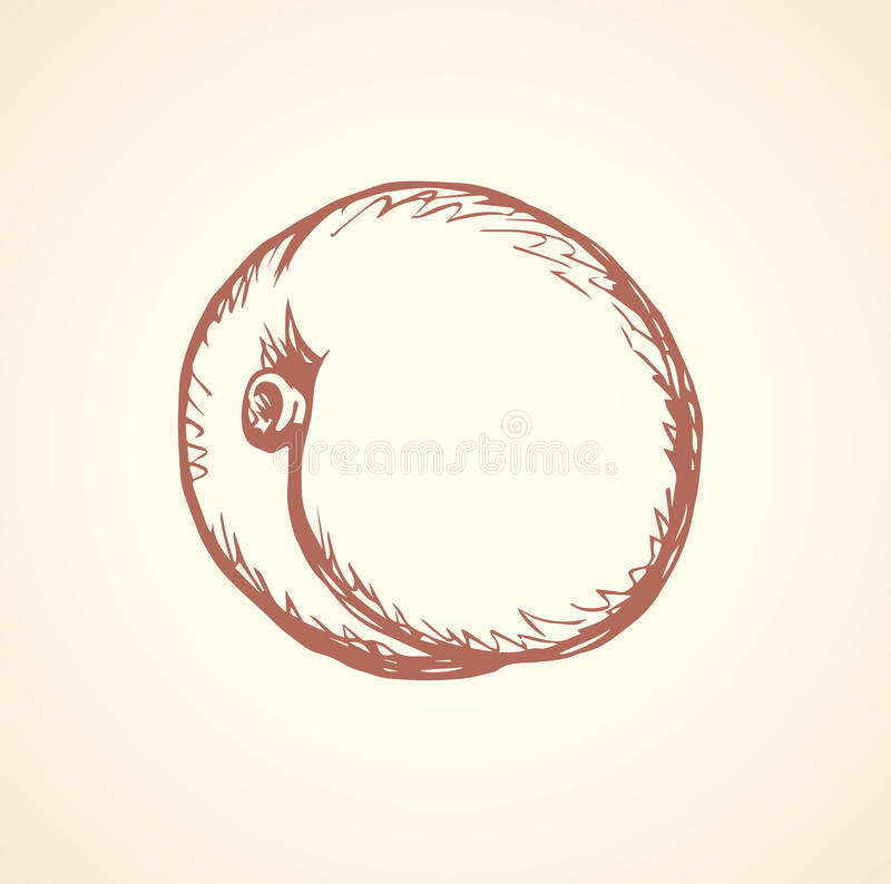 Illustration de vecteur abricot illustration stock