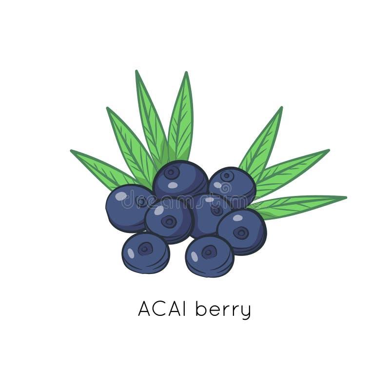 Illustration de vecteur de baies d'Acai Aliment biologique cartoon illustration libre de droits