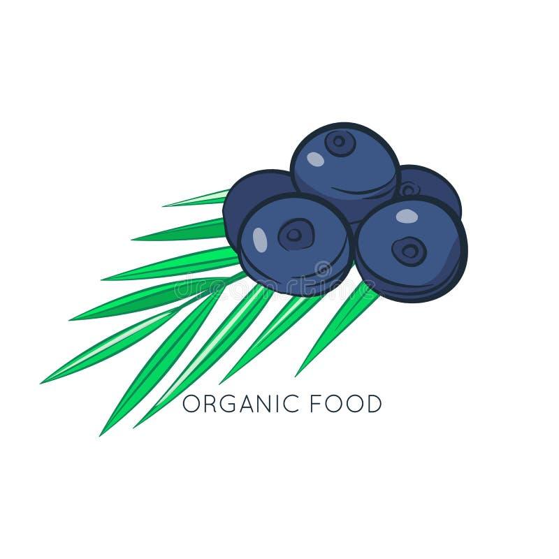 Illustration de vecteur de baies d'Acai Aliment biologique Type de dessin anim? illustration libre de droits