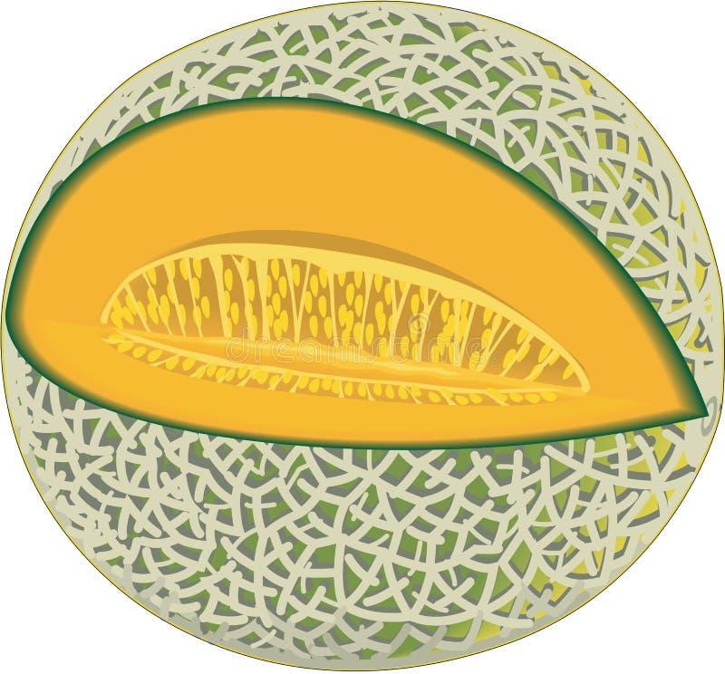 Illustration de vecteur de cantaloup illustration de vecteur