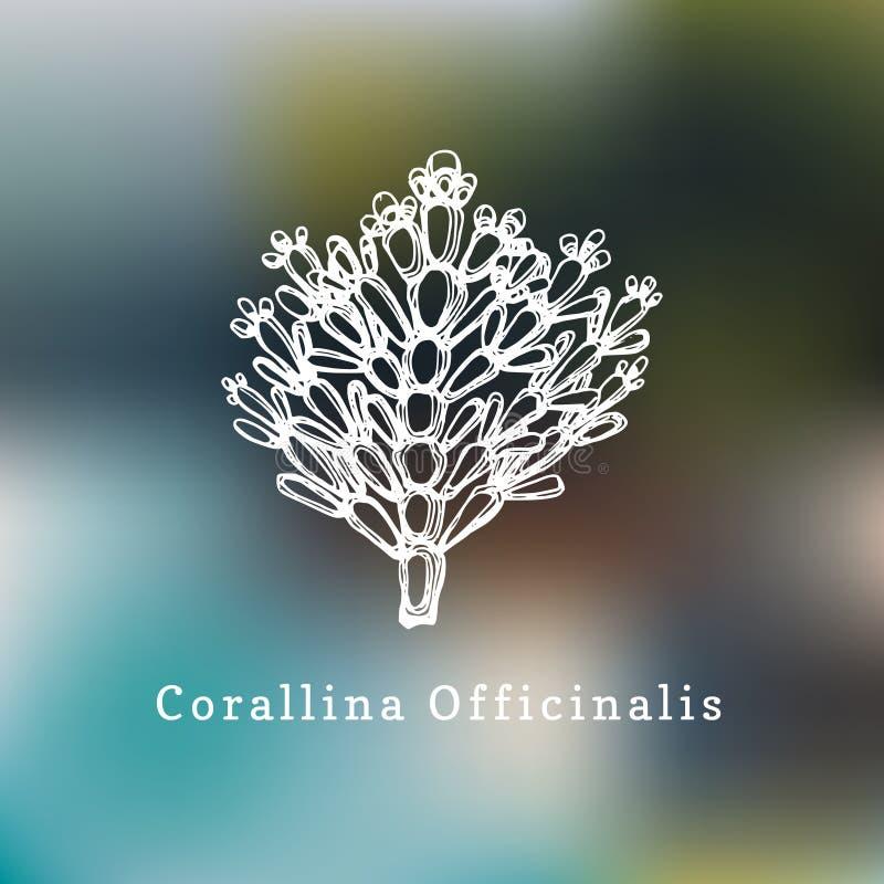 Illustration de vecteur de Corallina Officinalis Dessin d'algue rouge calcaire sur le fond brouillé illustration stock
