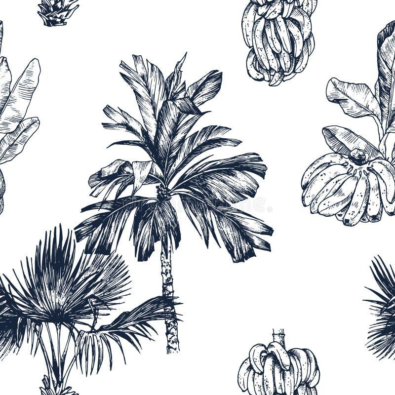 Illustration de vecteur de croquis de fruit de palmier et de banane pour la conception, site Web, fond, bannière Course et vacanc images libres de droits