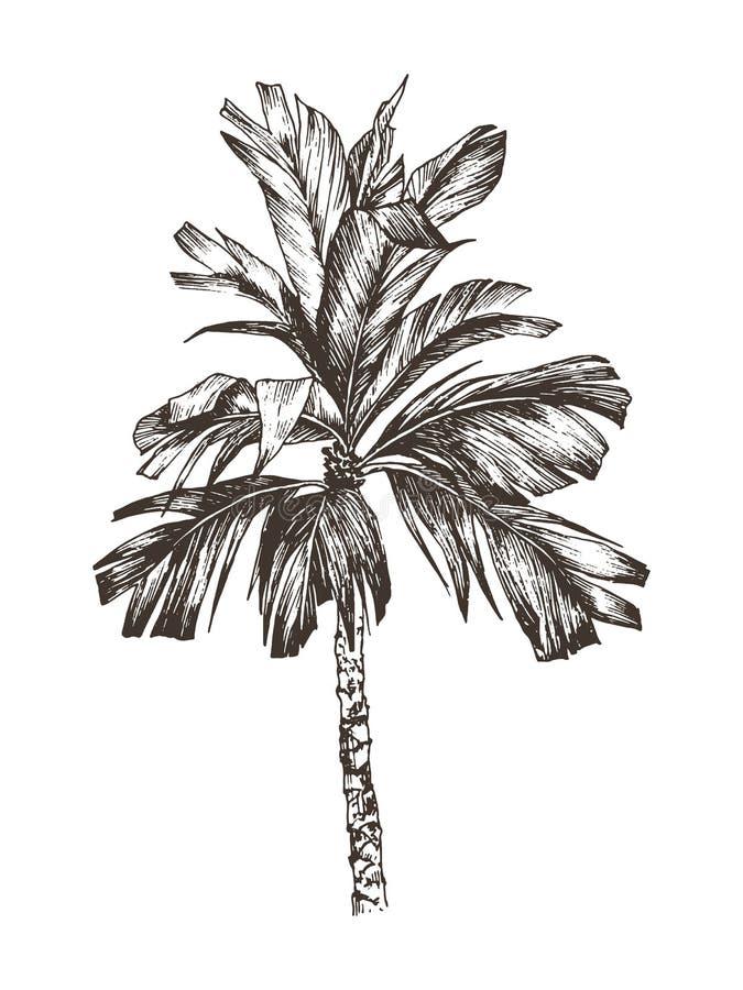 Illustration de vecteur de croquis de palmier pour la conception, site Web, fond, bannière Dessin de main floral sur la plage Voy photographie stock