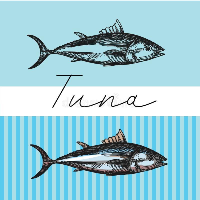 Illustration de vecteur de croquis de thon Ensemble tiré par la main d'images avec des poissons Illusttration de nourriture pour  images stock